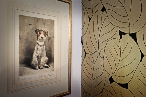 Framed picture of long haired jack russell dog